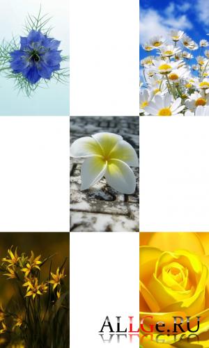 Обои для LG-Arena (Цветы)