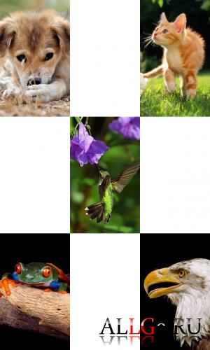 Обои для LG-Arena (Животные) - Часть 1